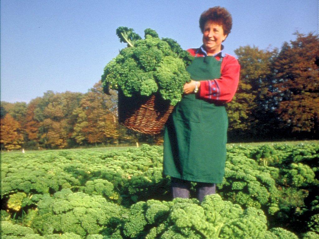 Geschichte Fehnkultur Landwirtschaft
